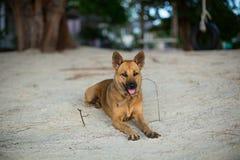 Samotny pies na plaży Zdjęcia Royalty Free