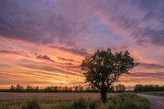 samotny pola drzewo zdjęcie stock