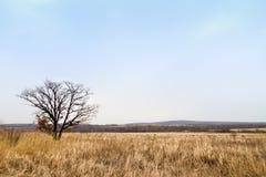 samotny pola drzewo Fotografia Stock