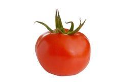 samotny pomidorowy biel Fotografia Royalty Free