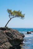 Samotny potargany drzewo przy krawędzią wybrzeże Obrazy Royalty Free