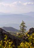 samotny rock drzewo Obraz Royalty Free
