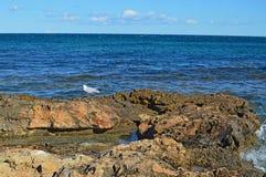 Samotny Seagull Fotografia Stock