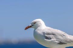 Samotny Seagull Obraz Royalty Free