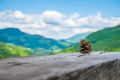 Samotny sosna rożek kłama na beli Obrazy Royalty Free
