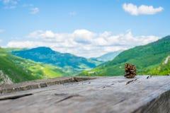 Samotny sosna rożek kłama na beli Zdjęcie Royalty Free