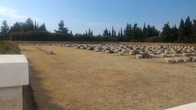 Samotny Sosnowy cmentarz zdjęcia stock
