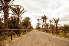 Samotny spaceru sposób otaczający z palmami Zdjęcia Stock