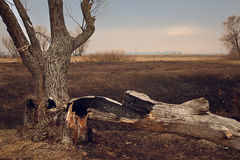Samotny stary drzewo w jesień zmierzchu zbliżeniu fotografia royalty free