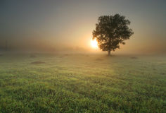 samotny sunrise drzewo Zdjęcie Royalty Free