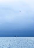 Samotny surfingowiec w morzu i seagull w niebie Fotografia Royalty Free
