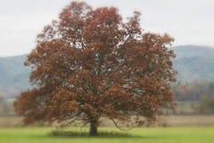 Samotny Surrealistyczny Czerwony drzewo obraz royalty free