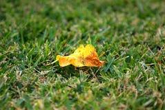 samotny trawa liść Fotografia Stock