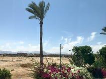 Samotny tropikalny drzewko palmowe w pustyni pod otwartym niebem na wakacje, tropikalny, południowy, ciepły kurort pod słońcem, zdjęcia royalty free