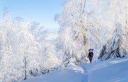 Samotny turysta w śnieżnych drewnach zdjęcie royalty free