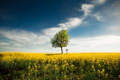 samotny świat zdjęcie royalty free