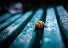samotny świr Zdjęcie Stock