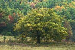 Samotny Zielony drzewo fotografia stock