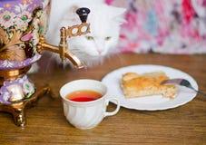 Samovar con un gato de la empanada de la taza y de los pescados Foto de archivo libre de regalías
