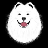 Samoyed de chien, chiot d'ami Images stock
