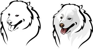 Samoyed dog breed Stock Image