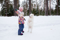 Samoyed dog with a girl Stock Image
