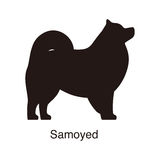 Samoyed dog silhouette, side view, vector Stock Photo
