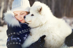 Samoyed husky with owner Stock Images