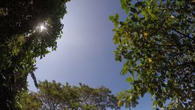 Trees and vegetation on mountain lake shore. underside view. Sampaloc Lake, San Pablo City, Laguna, Philippines - February 20, 2018: Trees and vegetation on stock video