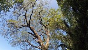Trees and vegetation on mountain lake shore. rotating underside view. Sampaloc Lake, San Pablo City, Laguna, Philippines - February 20, 2018: Trees and stock video