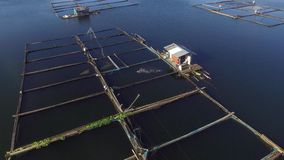 Fisherman feeding fish in bamboo cages on mountain lake. Drone aerial shot. Sampaloc Lake, San Pablo City, Laguna, Philippines - November 23, 2017: fisherman stock video