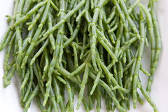 Samphire Royalty Free Stock Photos
