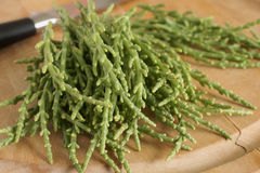 Samphire. A coastal herb also known as sea beans glasswort pickleweed or Salicornia Stock Photo