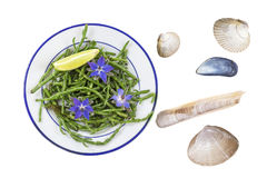 Samphire a coastal herb also known as sea beans sald of sallocornia. Samphire a coastal herb also known as sea beans glasswort pickleweed or Salicornia Royalty Free Stock Images