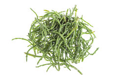 Samphire a coastal herb also known as sea beans sald of sallocornia Stock Photos
