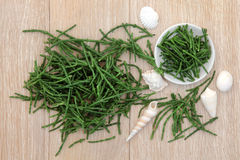 Samphire. Coastal vegetable with shell selection over oak wood background Royalty Free Stock Image