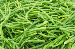 Samphire Stock Image