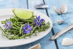 Samphire uma erva litoral igualmente conhecida como o sald dos feijões do mar do sallocornia fotos de stock royalty free