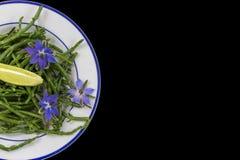 Samphire une herbe côtière également connue sous le nom de sald de haricots de mer de sallocornia photos libres de droits