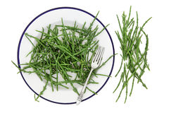Samphire Vegetable Health Food Royalty Free Stock Images