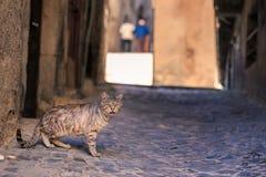 Sampietrini d'amour de chats Photo libre de droits