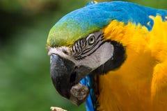 Colourfull parrot portrait stock image