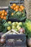 Collect fruit and vegetables. Sample of field collection for sale stock photos