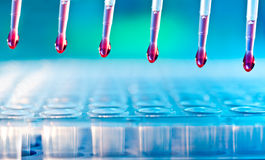 Sample loading with multichannel pipette. DNA analysis: loading reaction mixture into 96-well plate with multichannel pipette Royalty Free Stock Image