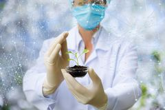 Sample shows a researcher in the mask . royalty free stock images