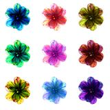Sampler of colorful floral patterns. Decorative colorful flowers on white background - fractal art Royalty Free Stock Photos