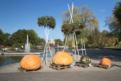 Samples of giant pumpkins Royalty Free Stock Photo