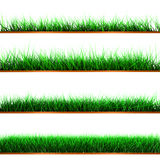 Samples of green color grass Stock Photos