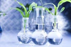 Samples of super grow plants stock photo