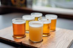 Sampling variety of beers from a beer flight. Sampling variety of craft beers from a beer flight at a microbrewery royalty free stock photography